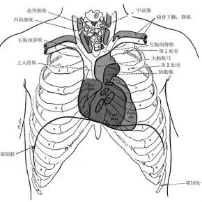 心臓の位置